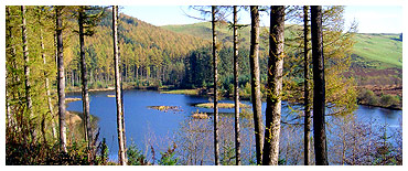Nant Yr Arian Forest Recreation Centre - See the daily Red Kite feeding, just outside Aberystwyth in Ceredigion.